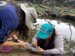 Students examine samples from a pond