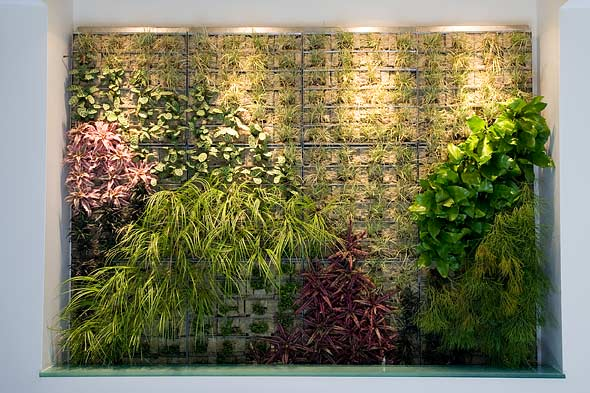 living wall made of plants