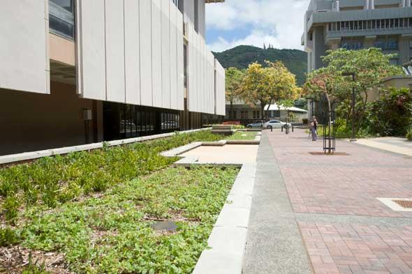 redone walkway outside of Hamilton Library
