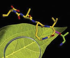 illustration of leaf and molecule