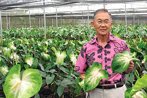 Grower Harold Tanouye in a greenhouse filled with green anthurium