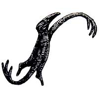 Illustration of a character making the letter S by Edward Gorey from Figbash Acrobate