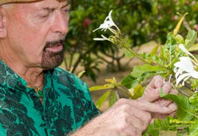 researcher examining plumeria