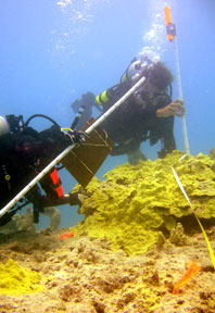 scientific divers study declining coral reef growth