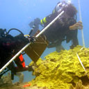 Permanent Link to New hypothesis explains ocean acidification effect