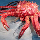 Permanent Link to King crabs invade Antarctic shelf