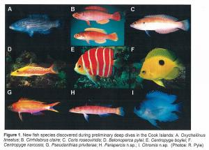 Samples of new fish species