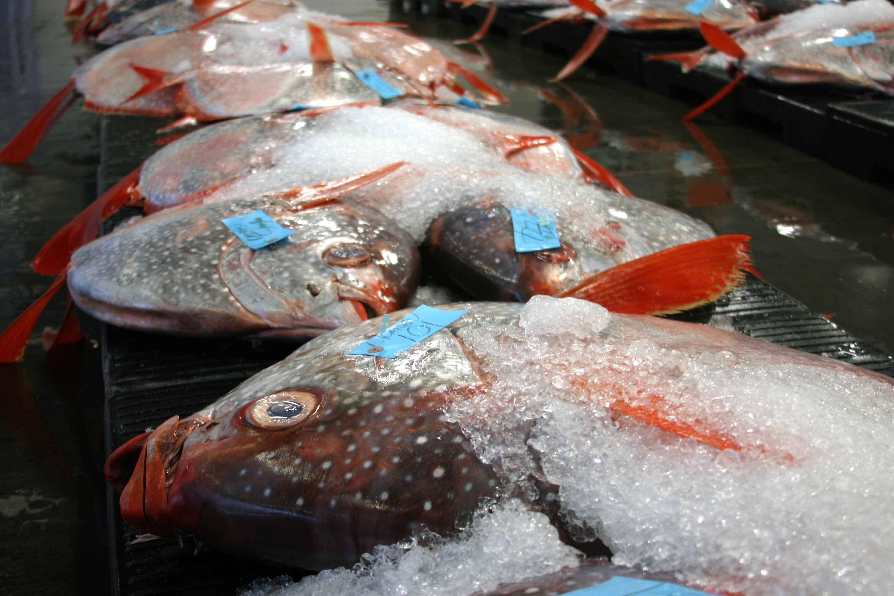 M noa ocean fish acquire more mercury at depth research for How much mercury is in fish