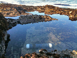 ocean acidification photo