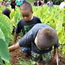 $460,000 award for Hawaiian environmental and social issues