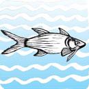 HIMB develops Hawaiian fishpond iPhone app
