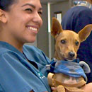 Major milestone for Windward veterinary program