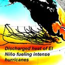 El Nino's fueling effect on intense hurricanes