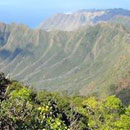 Honolulu CC students assist in cloud forest ecosystem research