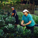 Fresh produce donated by Kauaʻi CC GoFarm program