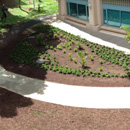 Engineering class project results in new walkway, rain garden
