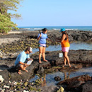 Pollution and coral reef health focus of UH Hilo research