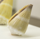 Marine shell collection on display at Sinclair Library