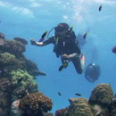 UH Mānoa student Haunani Kane fulfills lifelong dream on Great Barrier Reef