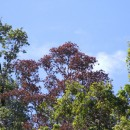 Understanding and stoppping rapid ʻŌhiʻa death
