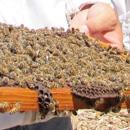 A global perspective on honeybee virus transmission