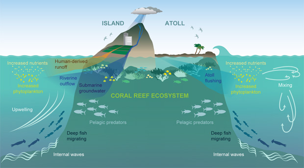 schematic showing run-off and effluent helps create nutrients for phytoplankton which are then eaten by fish and other sea organisms