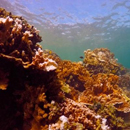 Coral reef experts bridge science to public policy