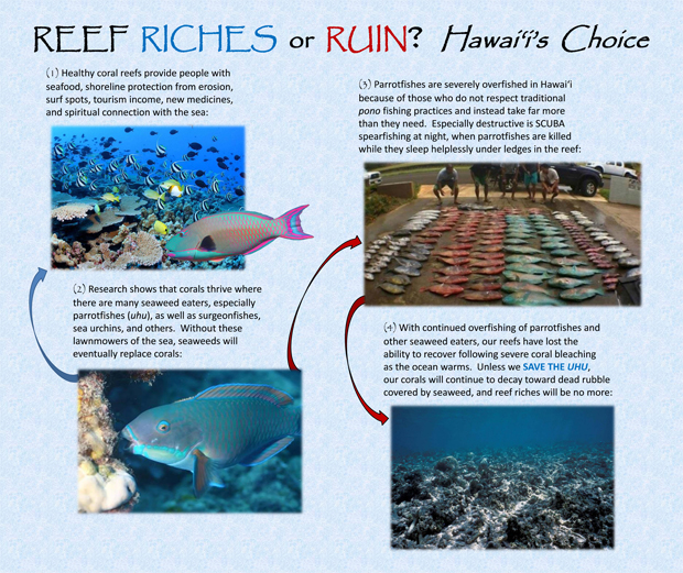 Poster of reef fish and the dangers of overfishing