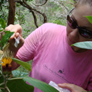 UH Mānoa botanist wins global recognition for plant conservation