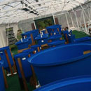 Aquaponics business classes offered by Maui College