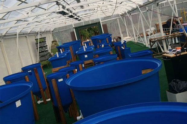 Aquaponics business classes offered by maui college for Aquaponics hawaii