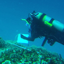 Forecasting coral disease outbreaks across Pacific Ocean