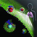 New biological identity of inhaled nanoparticles revealed