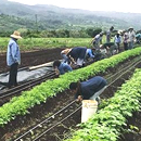 GoFarm Hawai'i receives funding to continue training future farmers