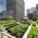 Benefits of urban agriculture estimated in the billions