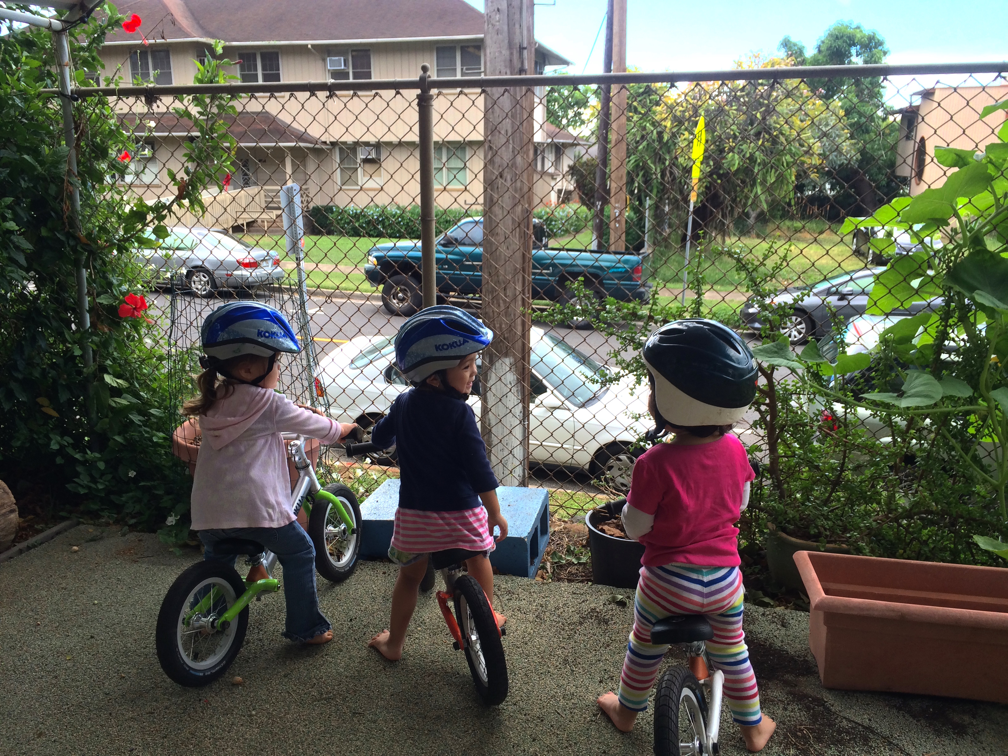 toddlers riding balance bikes
