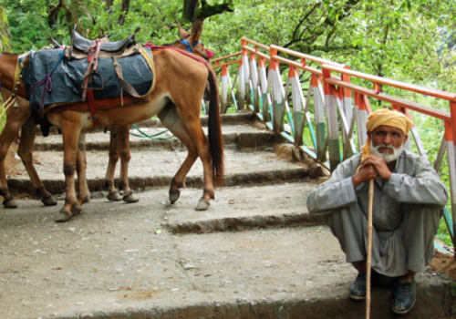 Photo of a man and a donkey on a bridge in Bangalore.