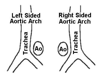 radiology in ped emerg med  vol 6  case 19