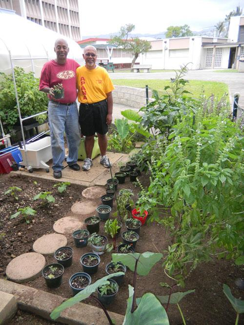 """Honolulu: Vegetable Garden And Greenhouse Get A """"green"""