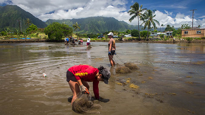 People Working On Cleaning A Fishpond