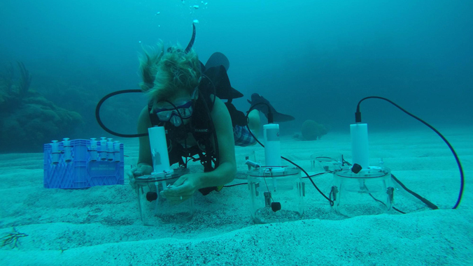 Researcher In Diving Gear Collecting Coral Sample