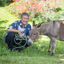 Bob-Bob and horse friends benefit from bento fundraiser