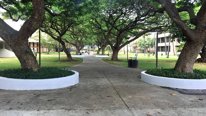 tree lined walkway at U H Manoa
