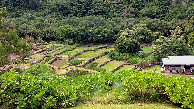 Terraced fields in a valley