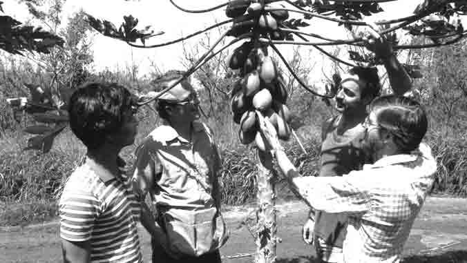 people looking at papaya tree