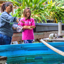 Helping Waimānalo families use aquaponics, improve health