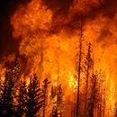 Greenhouse gas triggering more changes than we can handle