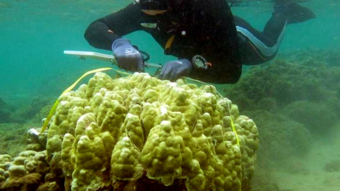 diver surveying coral in the ocean