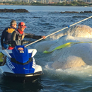 Whale carcass attracts expertise of UH professors