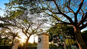 trees on U H Manoa campus